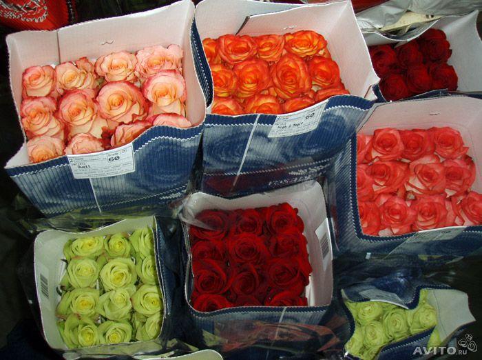 Красивые, роз оптовые в москве и московской области